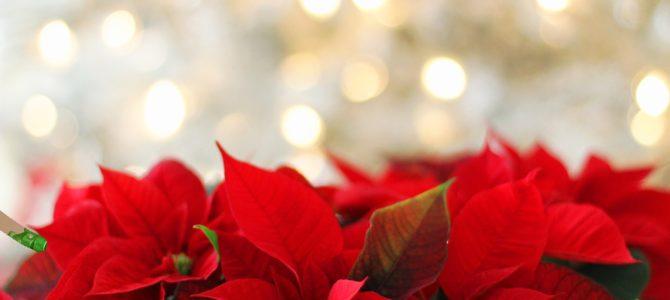 [21] Der Weihnachtsstern….